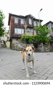 A street dog in front  of the Ottoman style renovated house in Historical Amasra - Amasra town, Bartin - Turkey - Shutterstock ID 1123900694