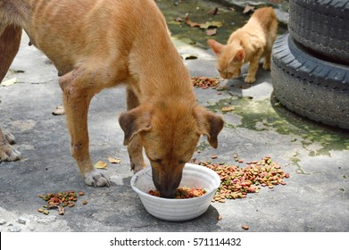 street dog and ginger kitten feeding instant dried food in car junkyard