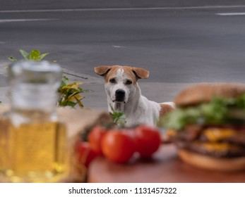 Street dog looking at hamburger and food ingradients with expression of hungry/starving just like asking to have some food