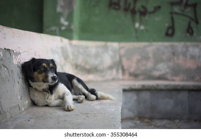 A street dog reclines in the ruins of a derelict building. The resort town of Kas, Turkey