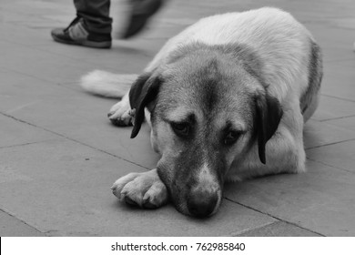 The Street dog with sadness