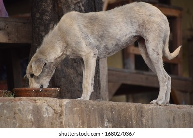 Street dog searching for food near Yamuna Ghat in Delhi India, Dog looking for yummy food during morning time