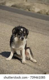 street dog sit down