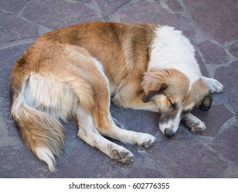 Street Dogs of Oaxaca Mexico