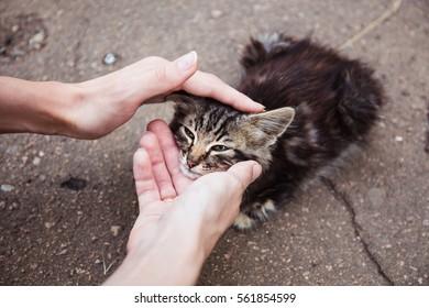 Street homeless cat. Human care.