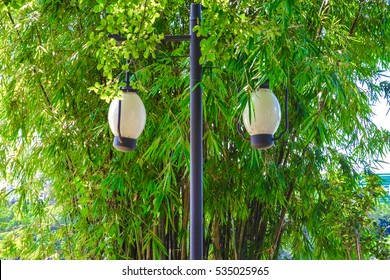 The street lamp in the bamboo forest