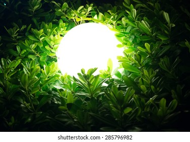 Street lamp in green bush at night, side view