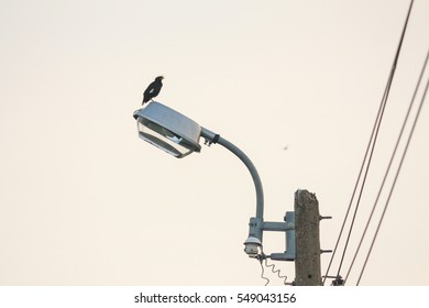 Street lamp on electricity post