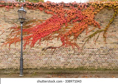 Street lantern in front of brick wall with grape vine red leaves in old town of Werder (Havel), Potsdam, Germany