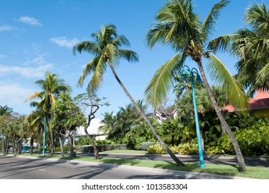 The street with leaning palms on Paradise Island (Bahamas).