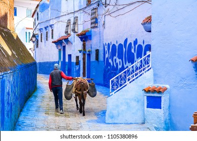 Street life in the blue city of Chefchaouen. Donkey used to transportation heavy goods in Morocco. Location: Chefchaouen, Morocco, Africa. Artistic picture. Beauty world