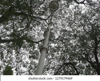 street light and plants background and wallpapper