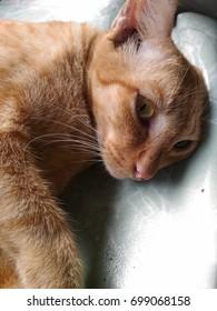 street orange cat sleeping