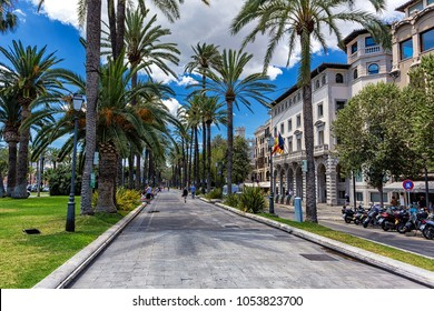 Street of Palma de Mallorca with lots of palms and historical buildings