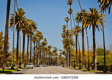 Street with palms in Beverly Hills