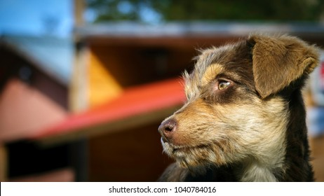 Street puppy posing in profile with unfocused background of a house