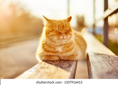 street red cat basking in the sun