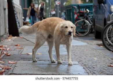 street scene dog walking on sidewalk