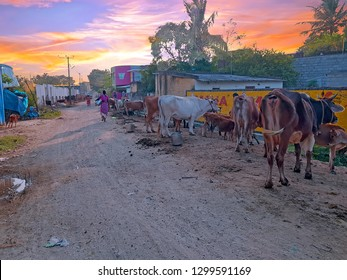 Street scene in Tiruvanamalai, Tamil Nadu in India at sunset