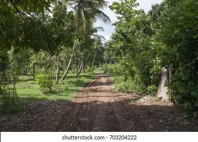 Street in the suburbs of Jacmel, Haiti