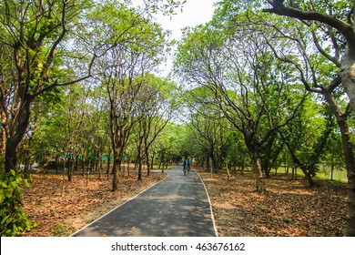 a street surrounding by green area and good atmosphere in a sunny day at public park