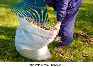 Street sweeper cleaning a lawn from dead leaves using a fan rake. Caretaker piles fallen leaves into a big sack. 