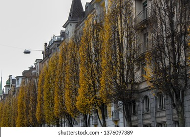 Street trees with yellow leaves in autumn, Lucerne, Canton of  Lucerne, Central Switzerland, Switzerland