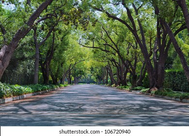 Street in upscale neighborhood covered with arched tree branches