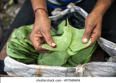 Street vendor in Kolkata, India, sorting leaves