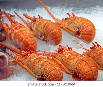 A street vendor sells fresh lobsters chilled on ice