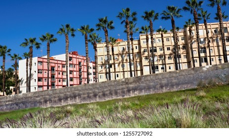 Street view in Puerto de la Cruz (Tenerife) in front of a street with very high palm trees and a wild meadow with blooming grasses, a gray low wall as a demarcation to the road, which one can not see