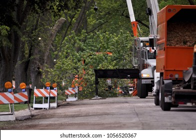 Street works. Tree removal. Large tree branch lowered down and prepared for grinding.