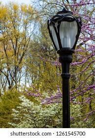 A streetlight in central park