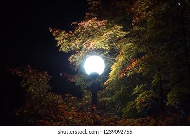 A streetlight and leaves