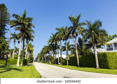 streets with palms in the beautiful living area of naples