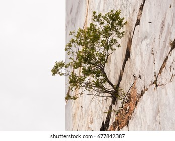 The strength of a plant born on a vertical marble wall