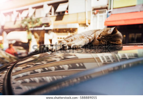 Stretched out cat lying on the top of a car parked on the street. Reflection on the windows of the lacquer