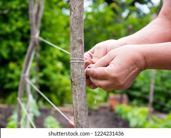 Stretching trellis to support the growth of garden plants