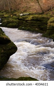 The Strid in strid wood, near Bolton Abbey in North Yorkshire