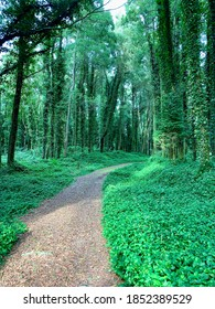 Striking green trail in the forest