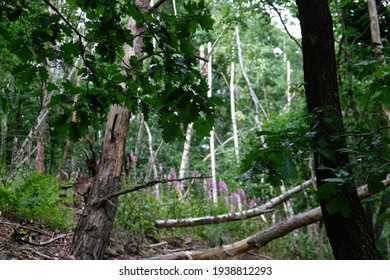 striking trees grow in the forest