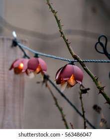 String of Garden Lights