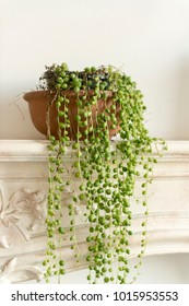 String of pearls plant on a fireplace mantel