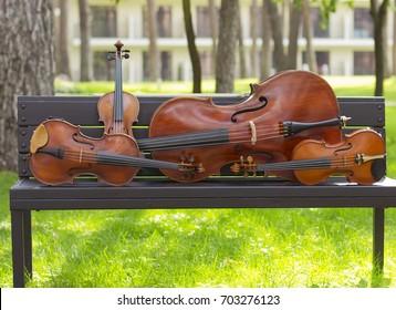 String Quartet. Cello. Viola. Violin. Live music. Concert in the forest