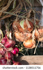 String of red and brown onions catches late afternoon the sun. Onions are hung outside to store them for the winter.