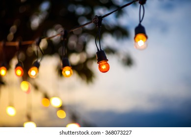 string wired light bulbs hanging from a tree in the area of wedding ceremony in evening