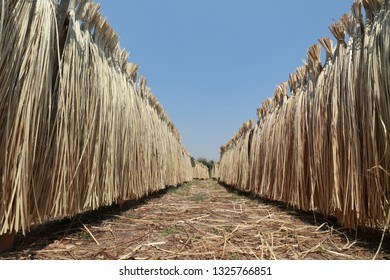 Strip of bamboo for tying or weaving,Bamboo wickerwork.