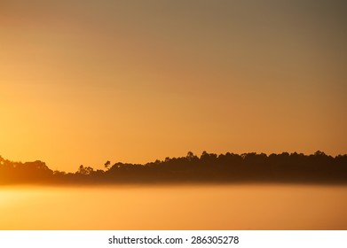 Strip of dark forest with blank orange sky and fog bank at dawn