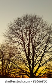 Strip of tree branches silhouette sunset