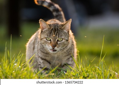 striped cat in grass